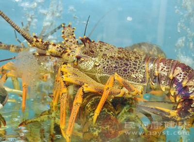 将螃蟹和龙虾活煮是一种很不妥当的行为
