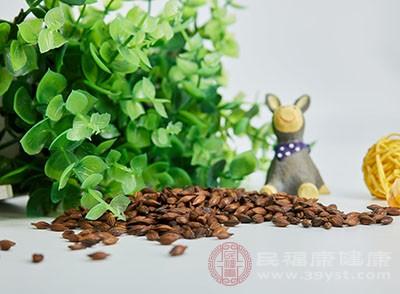 苦荞茶所含有的营养比大麦茶更丰富