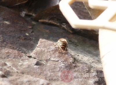 蜂毒素功效多 或对治疗特应性皮炎有益