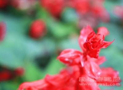 红花具有美容的功能