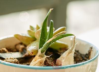 大蒜发芽能吃吗 吃大蒜竟有这么多好处