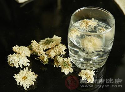 饮用菊花茶具有冷静的后果