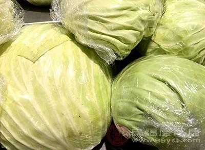 卷心菜的果胶、纤维素能阻止胆固醇、胆汁酸的吸收