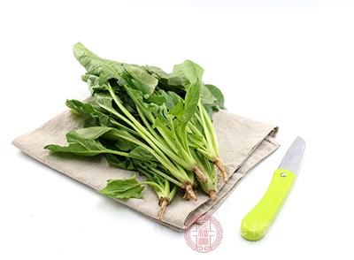 菠菜是一种维生素含量很高的蔬菜