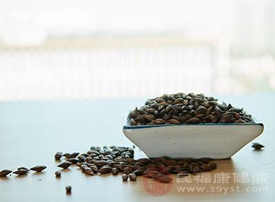 大麦茶可以帮助我们消化