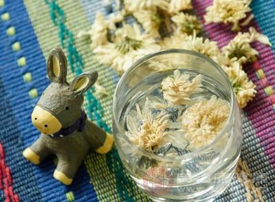 菊花茶的功效 想要消暑不妨多喝这种茶