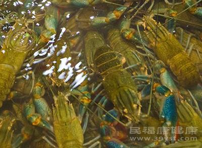虾的作用 常吃这种食物能增强免疫力