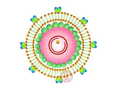 真菌性肠胃炎见机关胞浆菌、藻状菌、曲霉菌