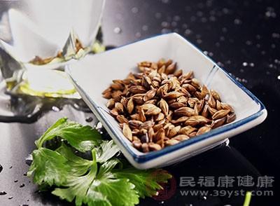 大麦茶的功效喝这种茶可以减轻油腻感