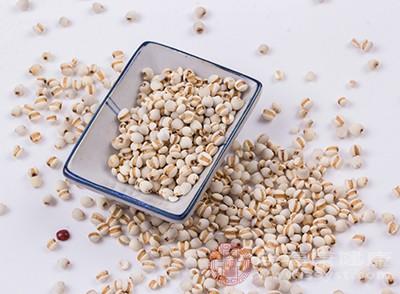 薏米有利水渗湿、健脾止泻等功效