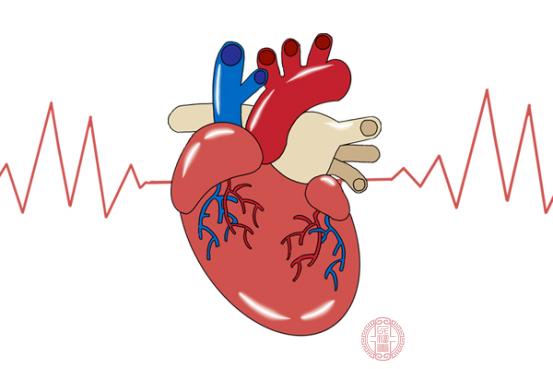 心率快的原因包括情緒起伏大、體溫升高和運動速度太快等