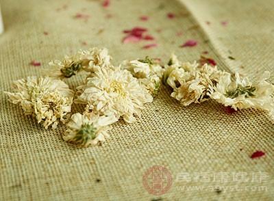 菊花茶有很好的明目清熱的作用