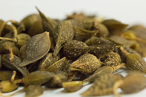 药用的连翘是木犀科植物连翘的干燥果实